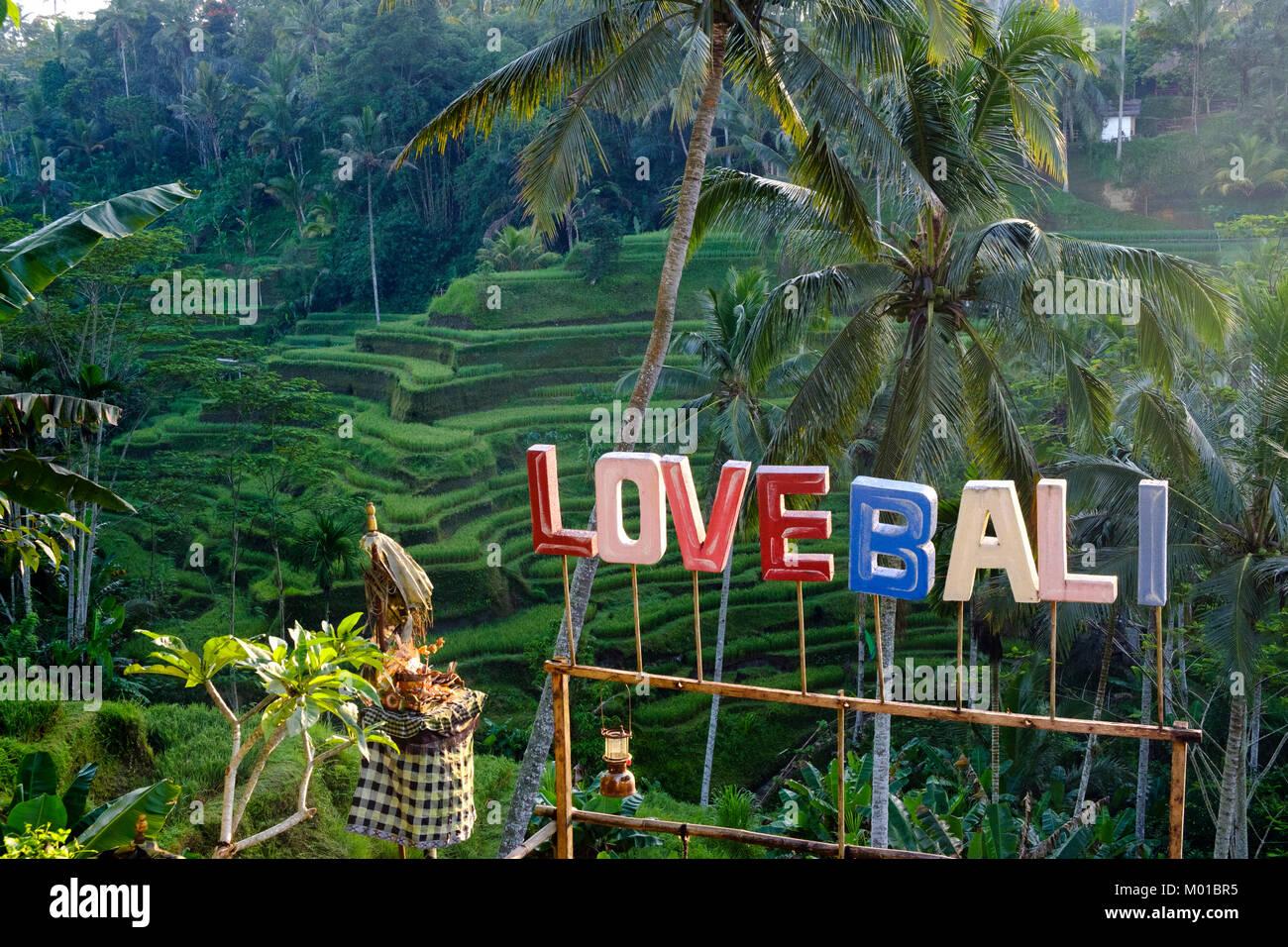 'Love Bali' sign at the Tegallalang rice terraces near Ubud, Bali, Indonesia. - Stock Image