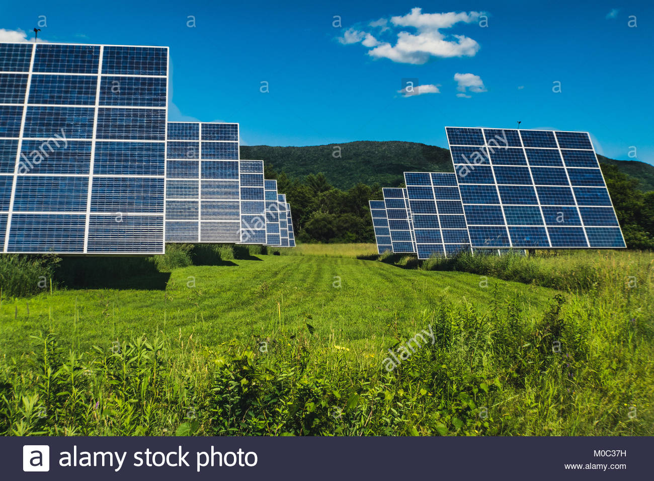 Up close in a field of solar panels. - Stock Image