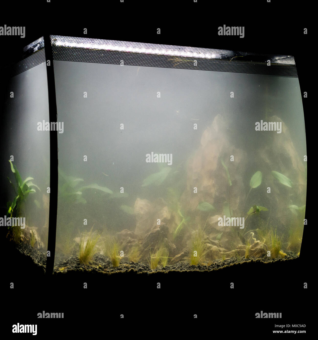 A Shot Of A Fluval Flex 57 Aquascape Showing The Foggy Water Just After  Planting