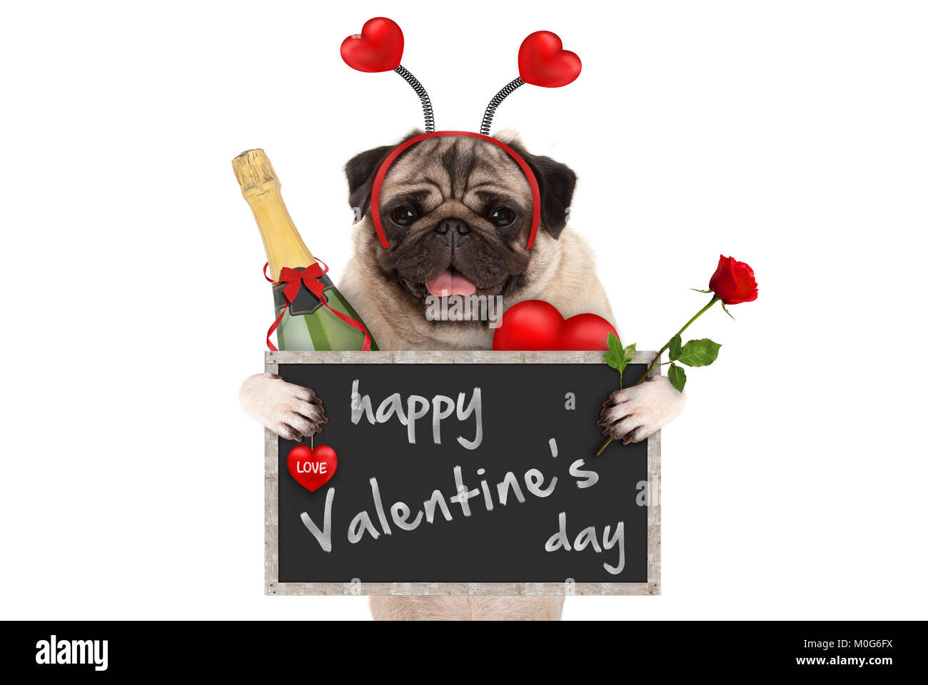 cute valentine's day pug dog with blackboard, champagne bottle, hearts diadem and rose, isolated on white background - Stock Image