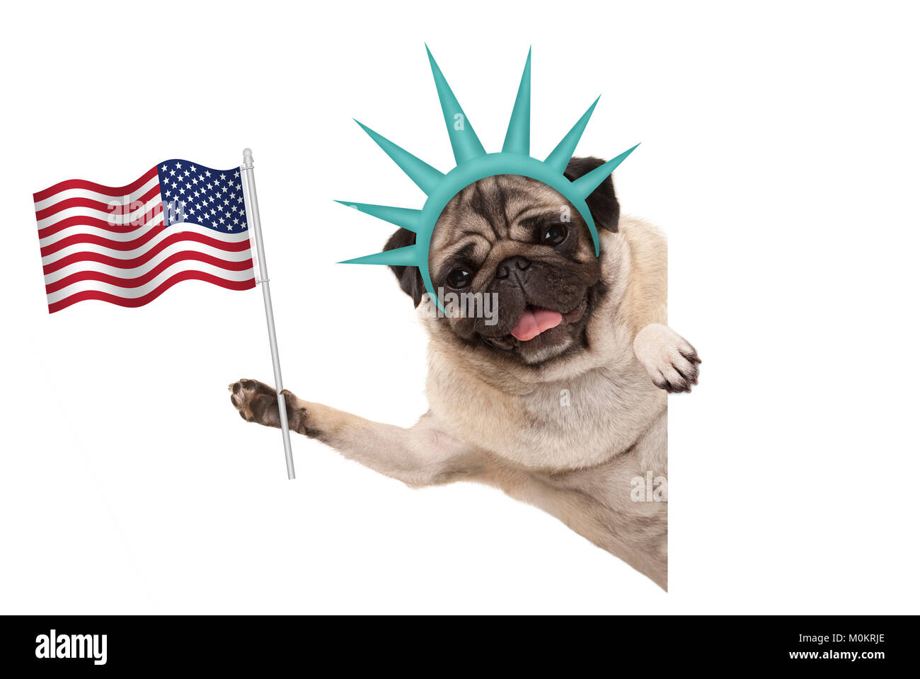 smiling pug puppy dog holding up American flag, sideways from white banner, wearing lady Liberty crown, isolated - Stock Image
