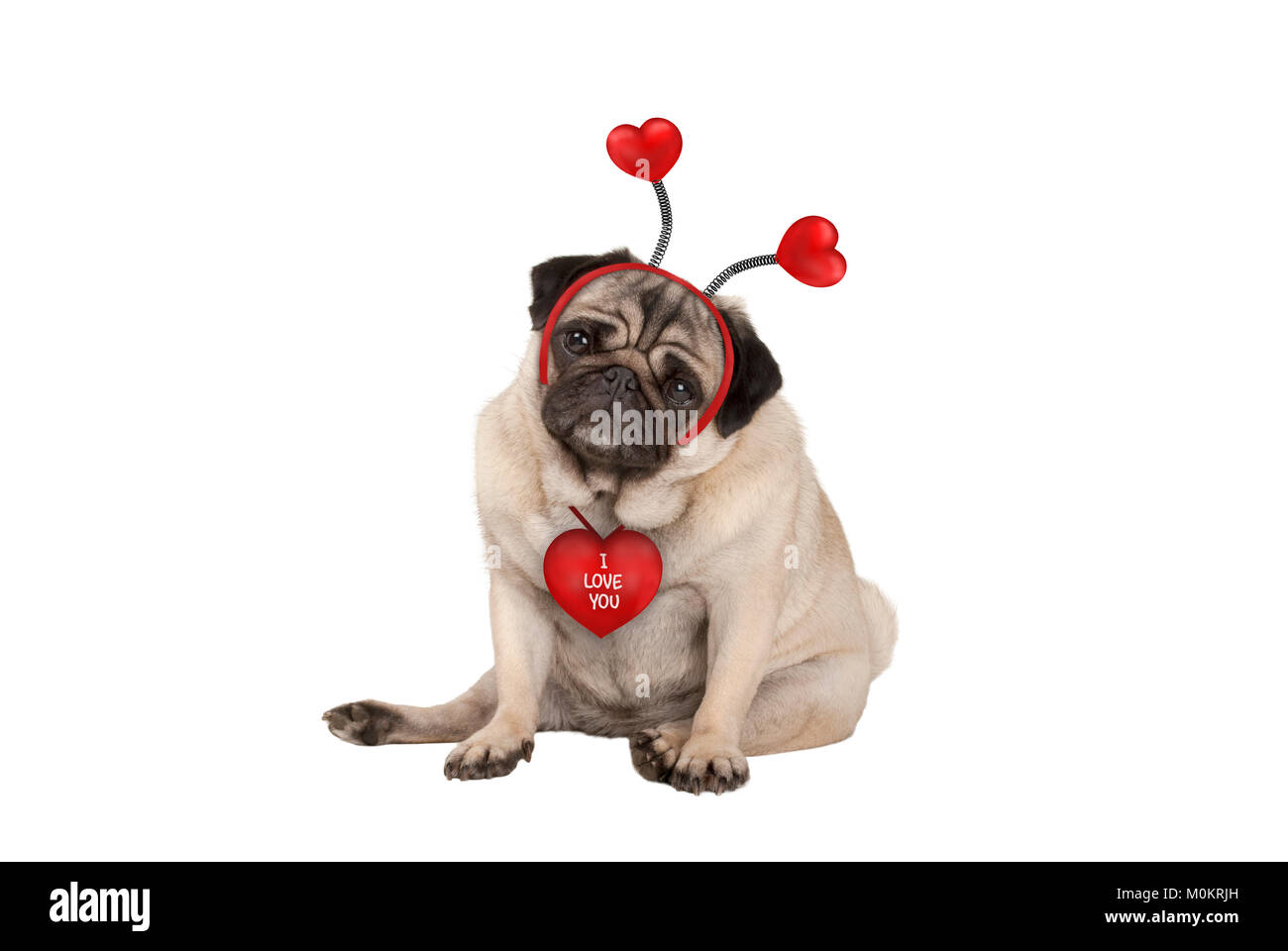 cute Valentine's day pug puppy dog, sitting down, wearing hearts diadem, isolated on white background - Stock Image