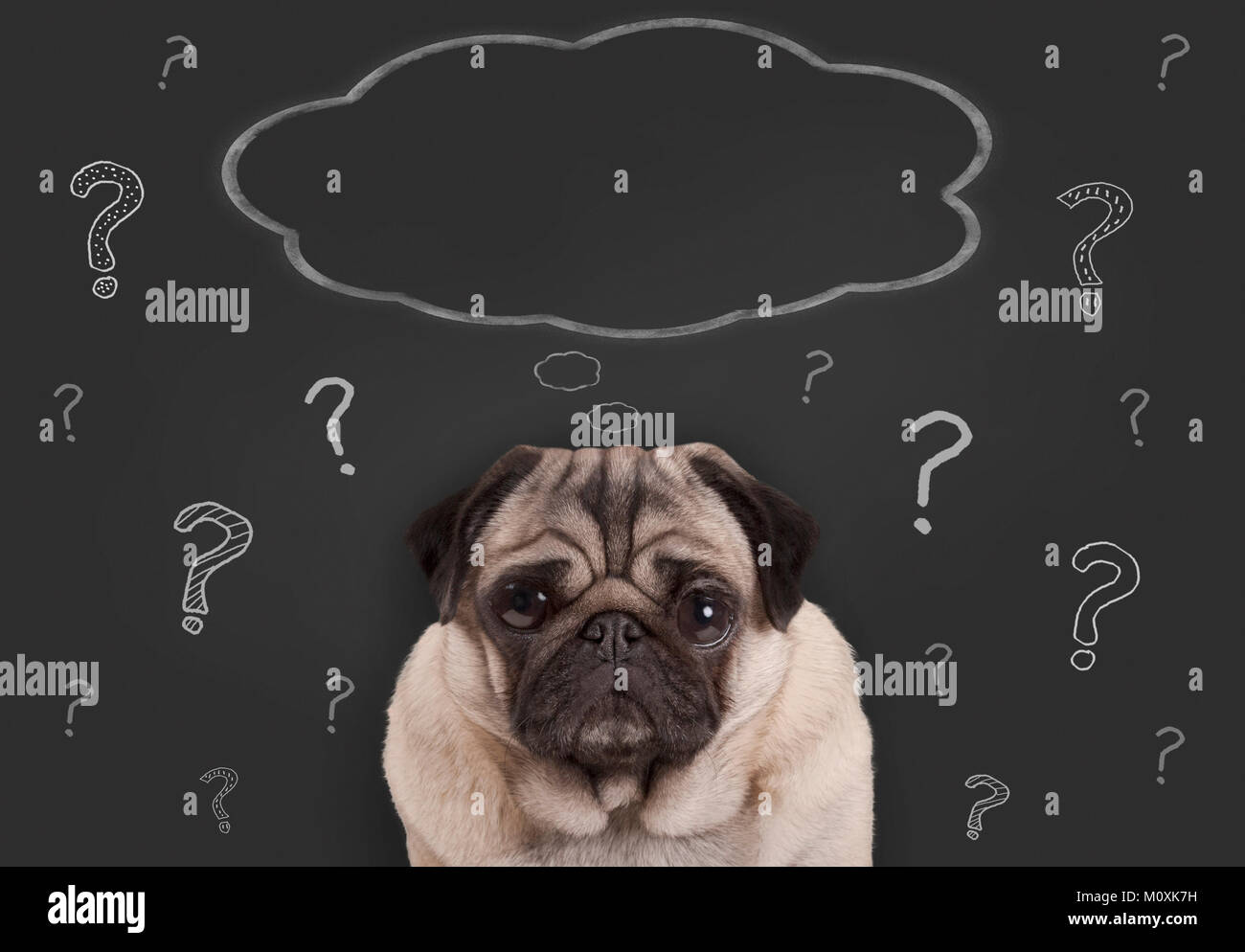 closeup of pug puppy dog sitting in front of  blackboard sign with hand drawn chalk question marks and blank thought - Stock Image