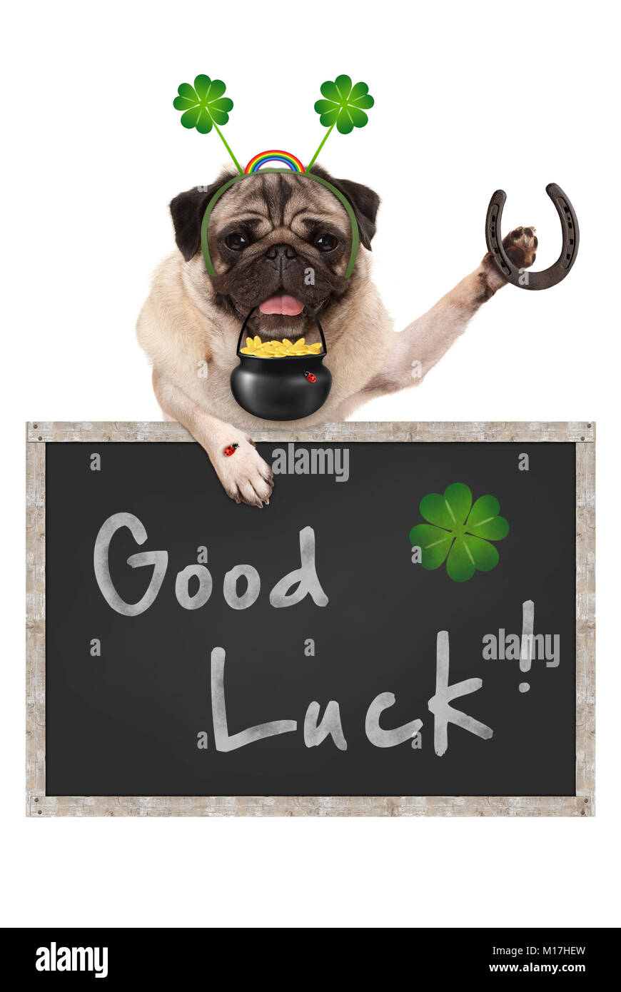 Talisman pug puppy dog, with blackboard sign, shamrock clover, golden coins, lady bug and horse shoe for good luck - Stock Image