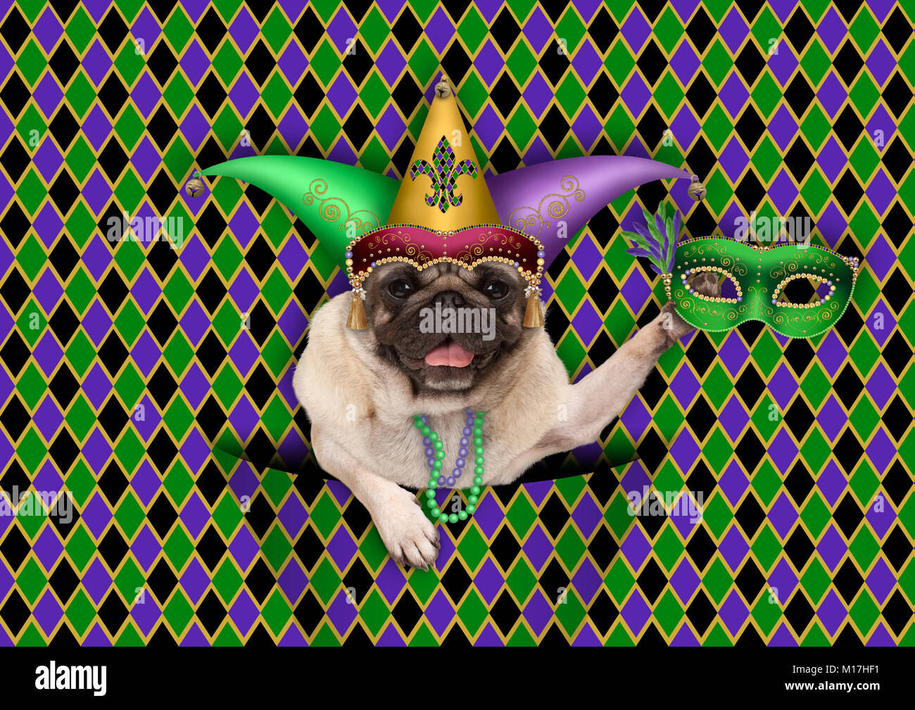 checkered mardi gras, fat tuesday, background, with harlequin pug dog holding venetian mask, wearing harlequin jester - Stock Image
