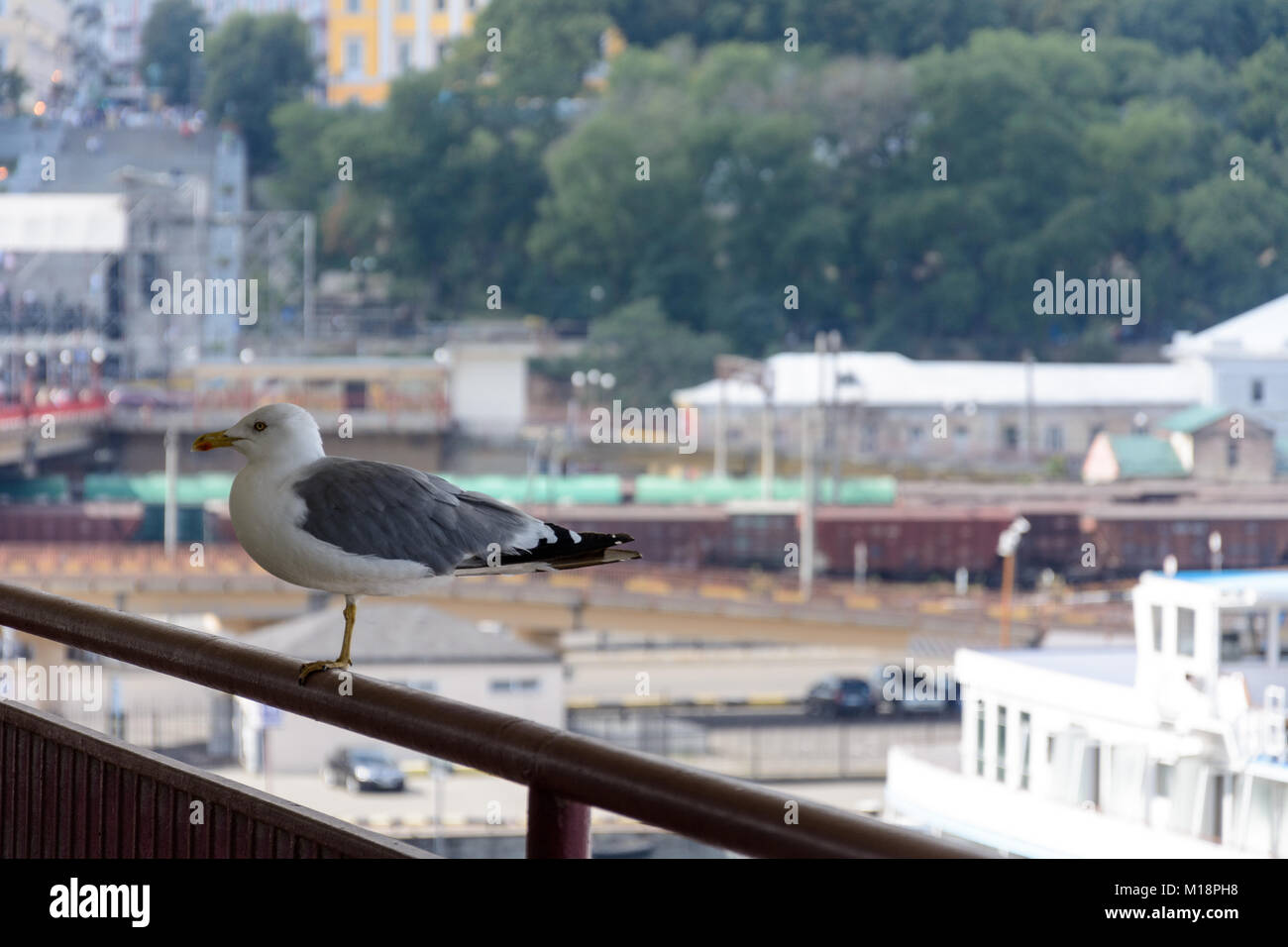 A beautiful seagull sits on the railways of the Odessa Sea Terminal. Behind this there is a magnificent Ukrainian - Stock Image