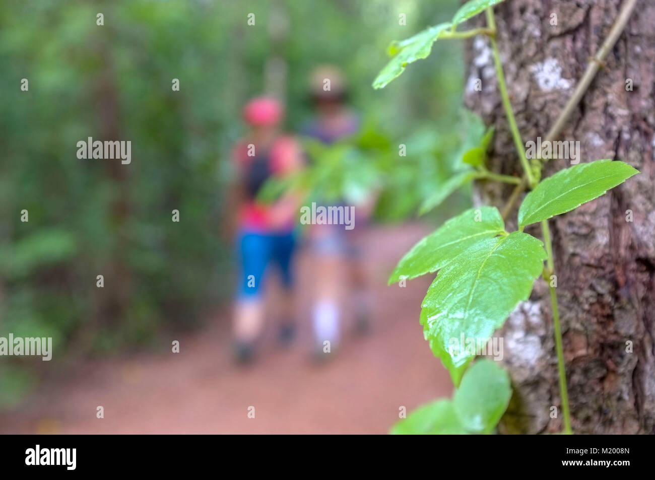 blurred-couple-walking-a-forest-track-at-east-point-reserve-a-suburb-M2008N.jpg