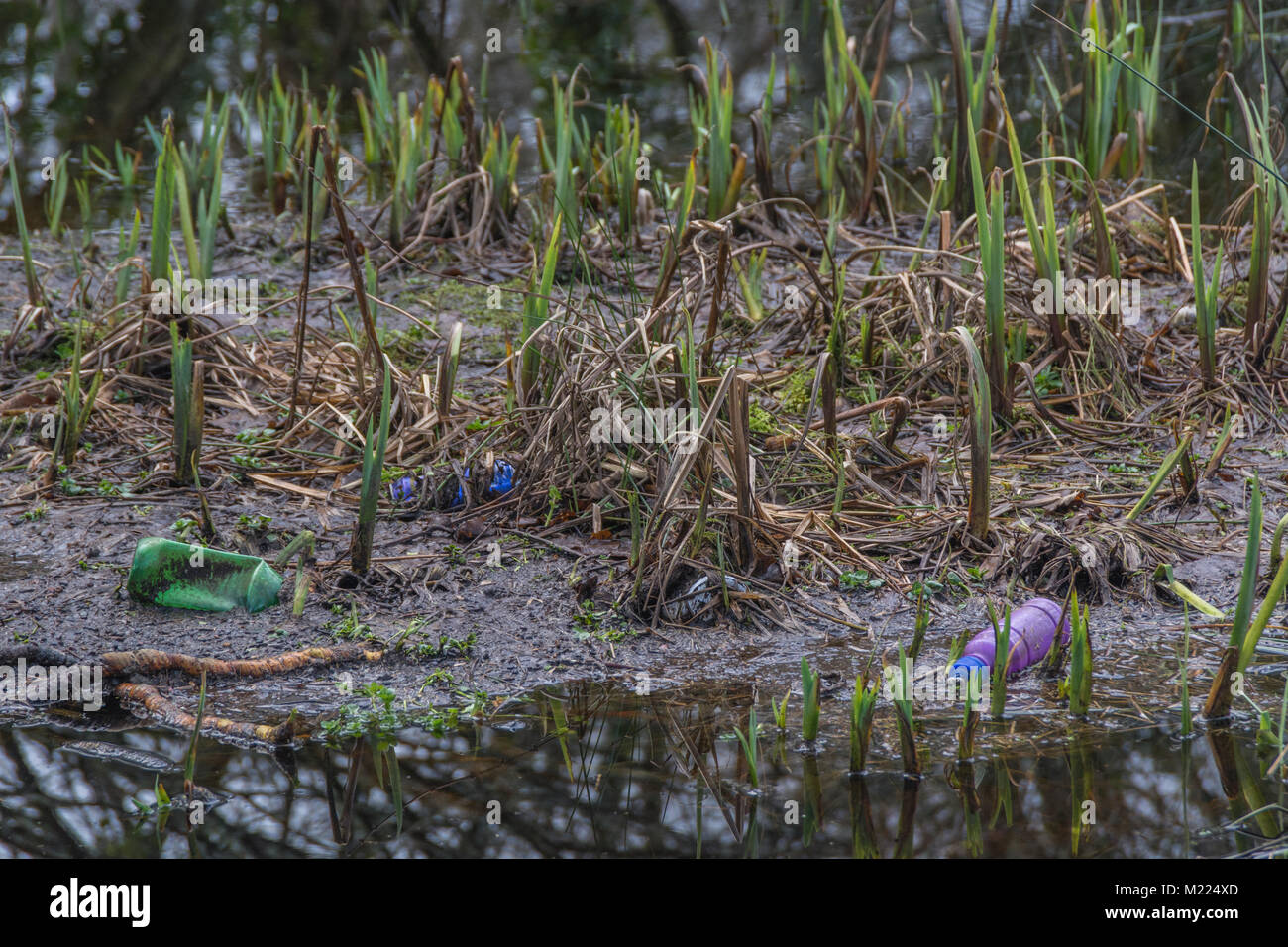 Plastic bottle washed up on marshy area - metaphor for environmental pollution, plastic pollution / plastic waste - Stock Image