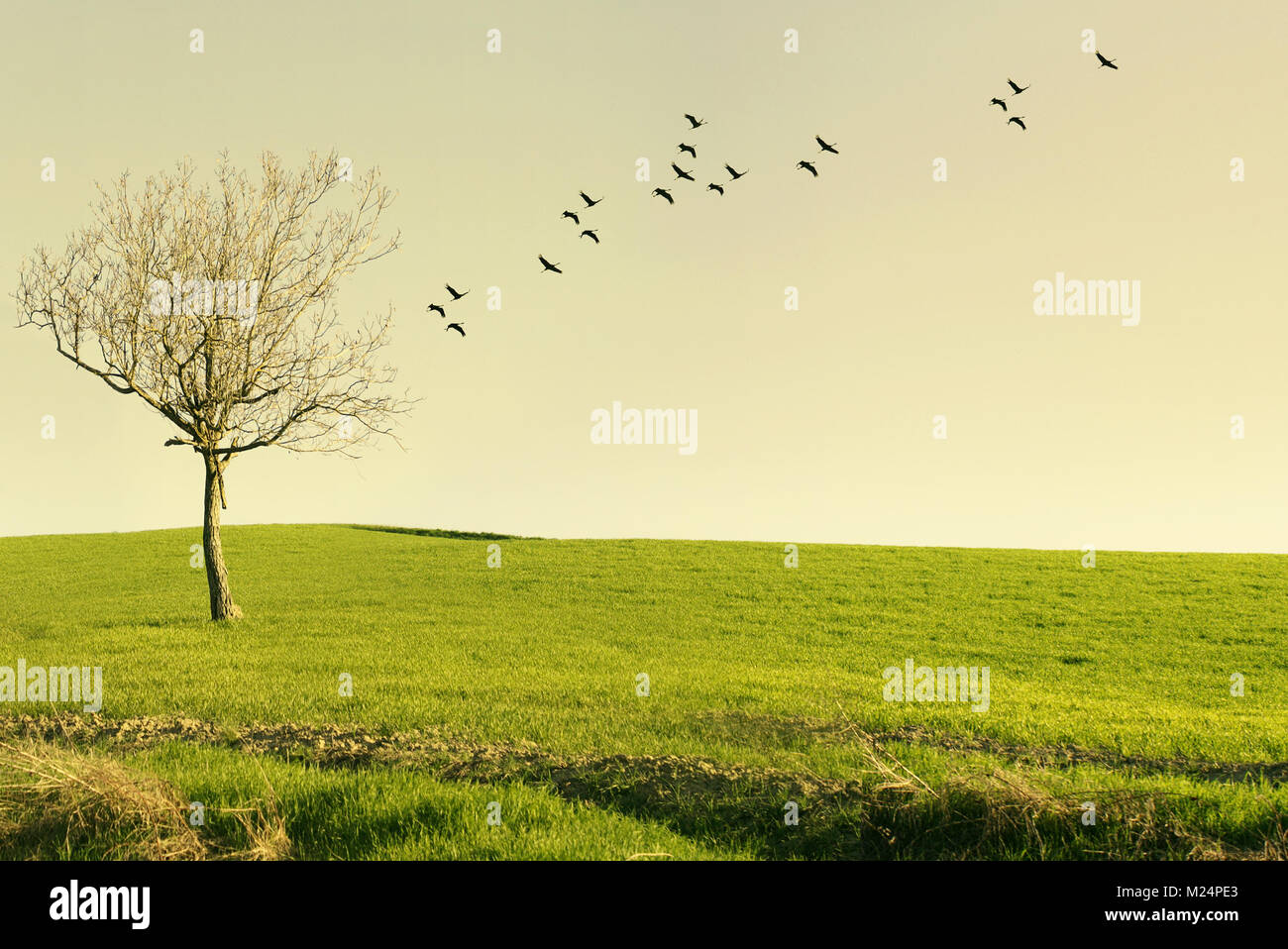 Beautiful poetic landscape with a tree isolated in a meadow and birds flying at sunset - Stock Image