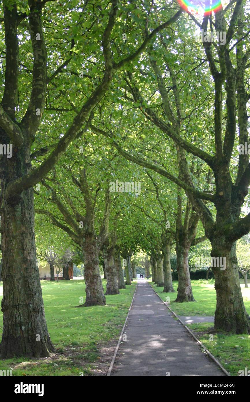 Avenue of trees - Stock Image