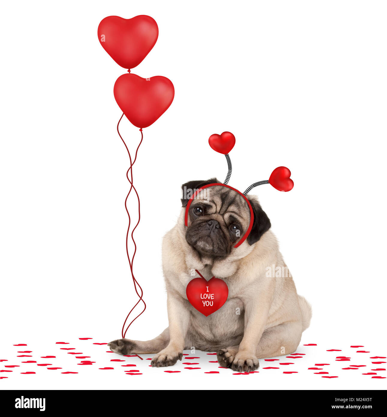 lovely cute valentines day pug puppy dog sitting down on confetti, wearing hearts diadem and holding red heart shaped - Stock Image