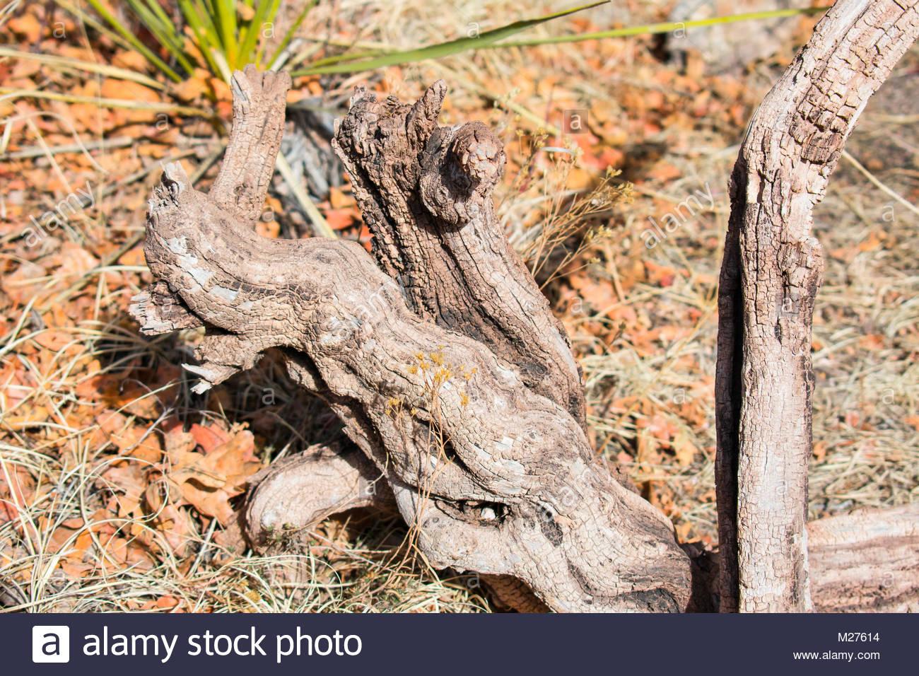 Dragon Branch - Stock Image