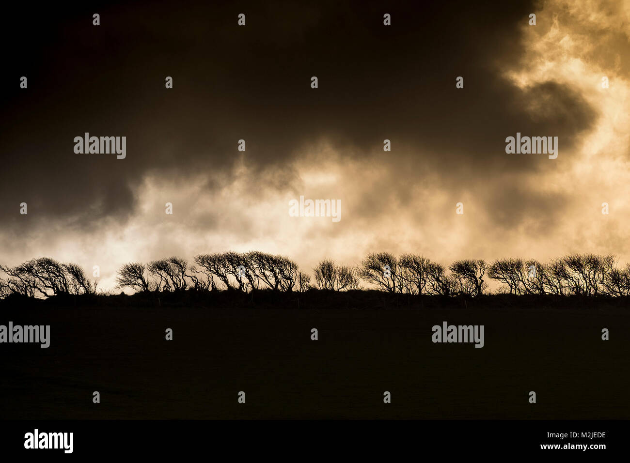 A hedgerow silhouetted against a dark moody sky. - Stock Image