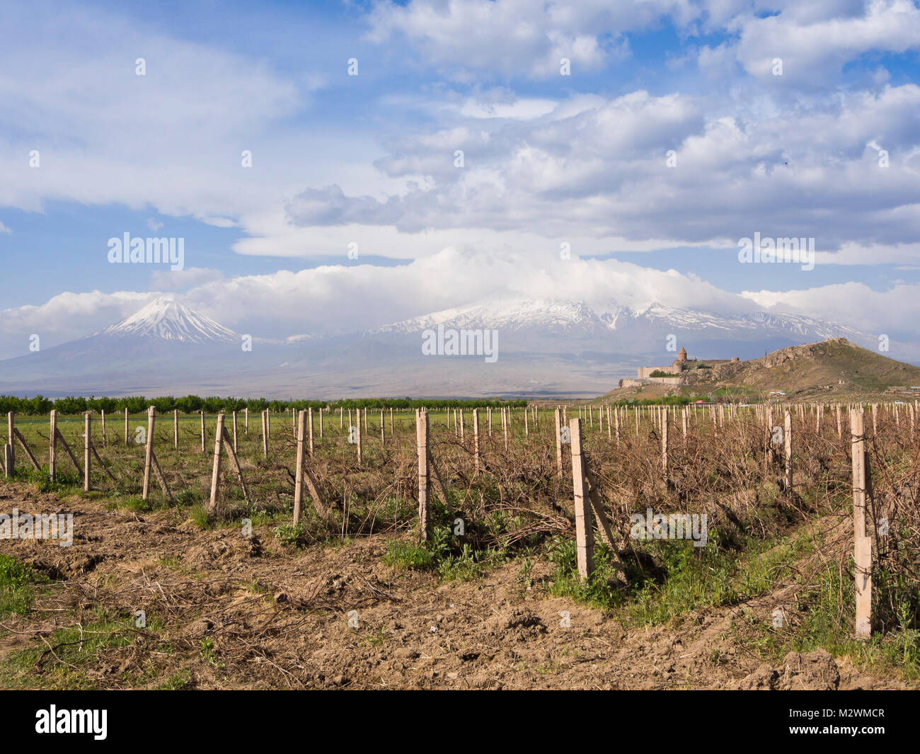 The Khor Virap monastery in Armenia and vineyards, with Ararat mountain behind, a popular and picturesque tourist - Stock Image