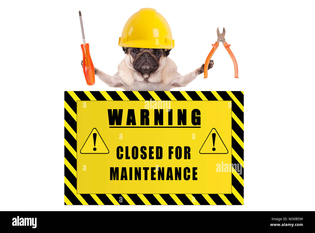 pug dog with constructor safety helmet holding pliers and screwdriver with yellow warning sign saying closed for - Stock Image