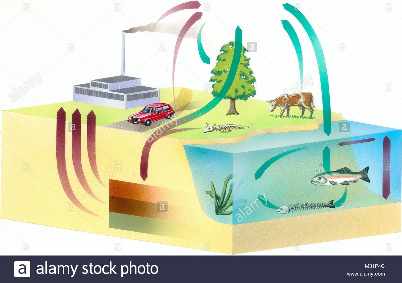 carbon cycle - Stock Image