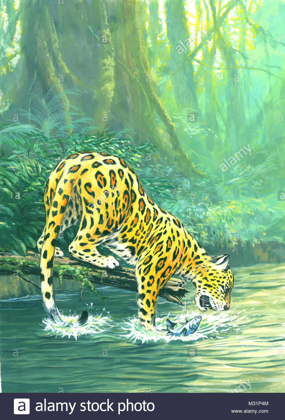 Leopard in fishing - Stock Image