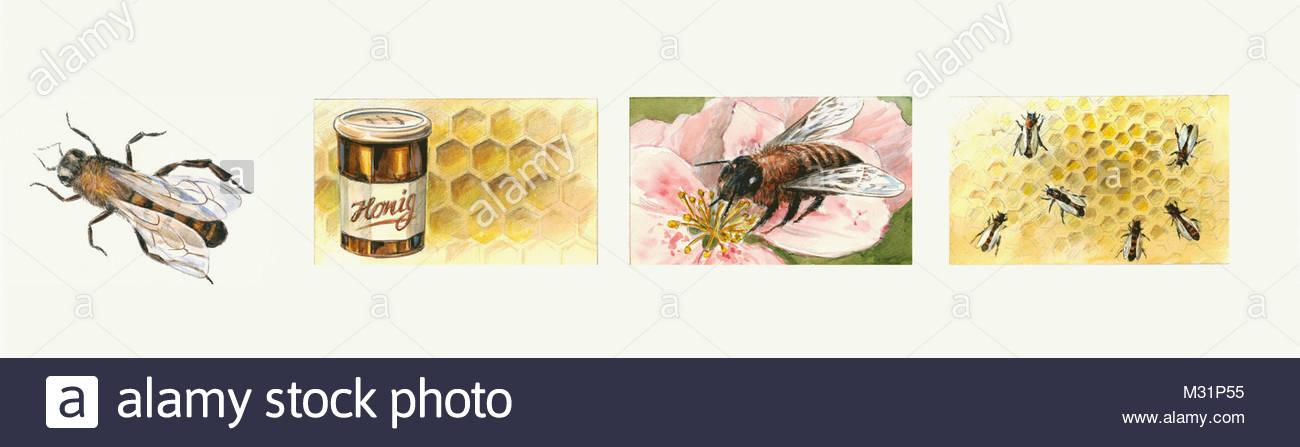 Natural environment honey-bee - Stock Image