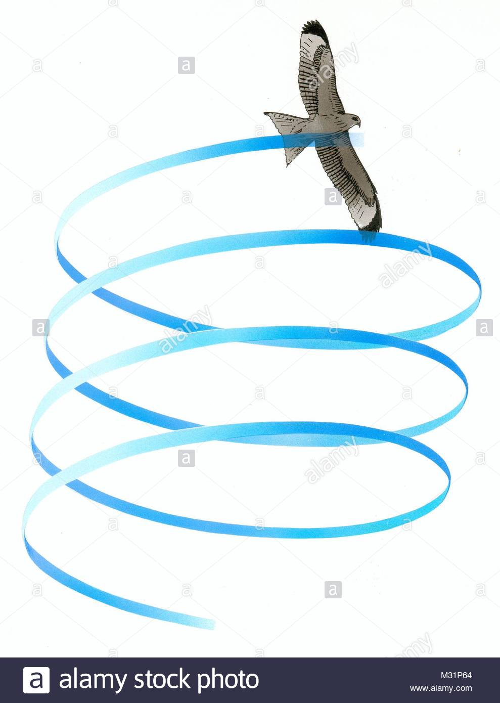 Red Kite Flying - Stock Image