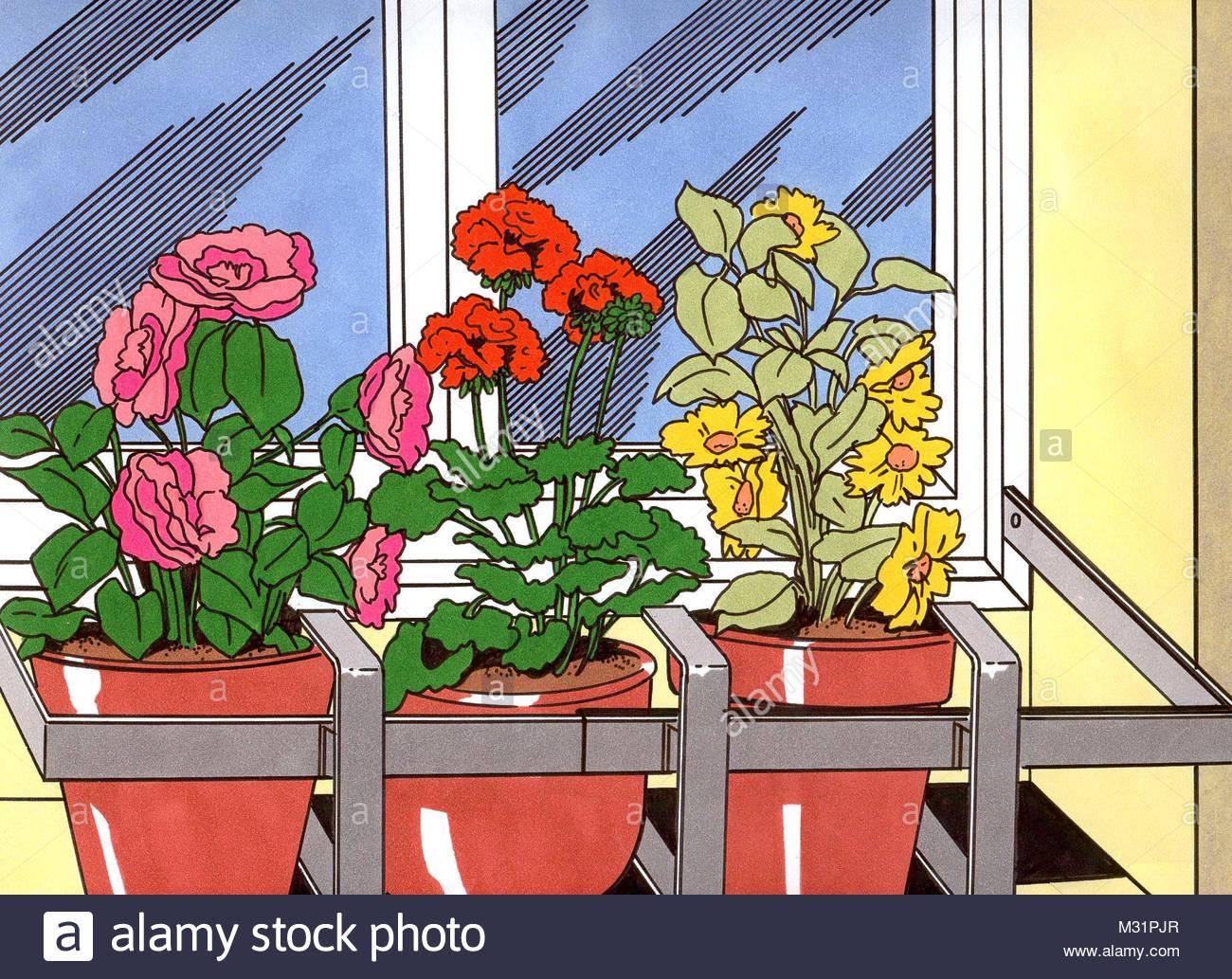 Planting flowers outside window - Stock Image
