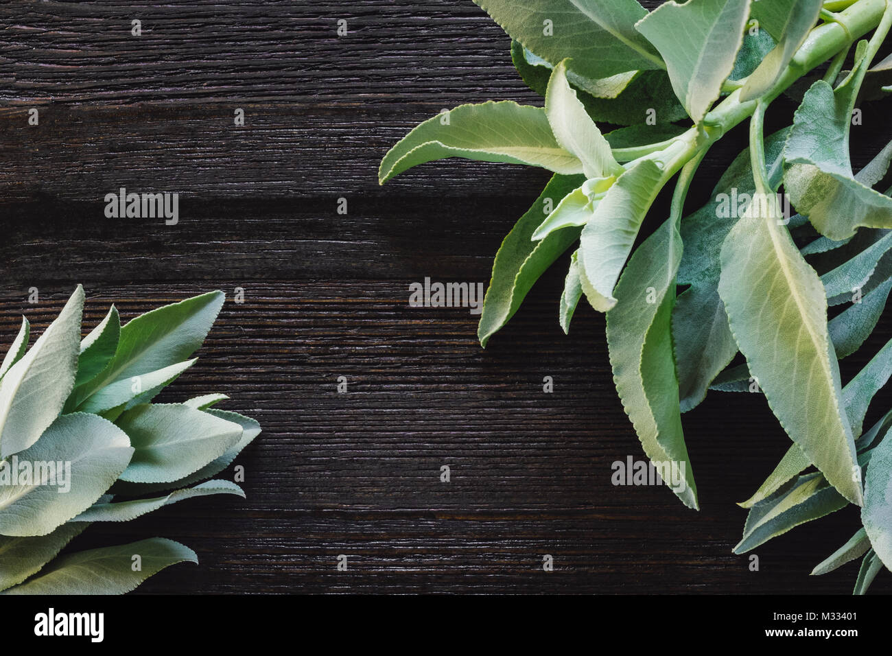 Fresh Sage on Dark Table with Space for Copy - Stock Image