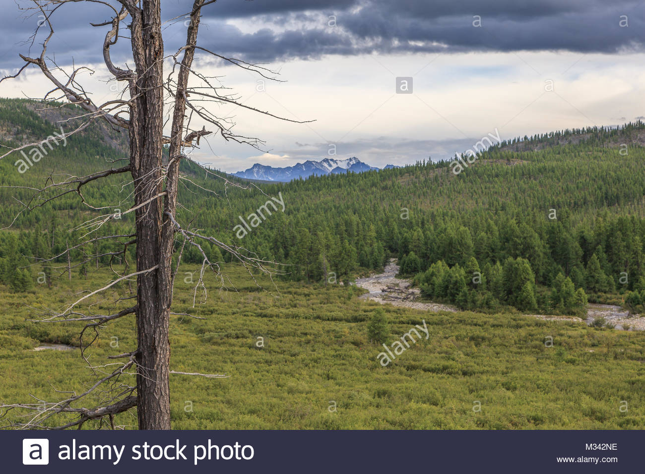 The dried up tree in mountains. - Stock Image