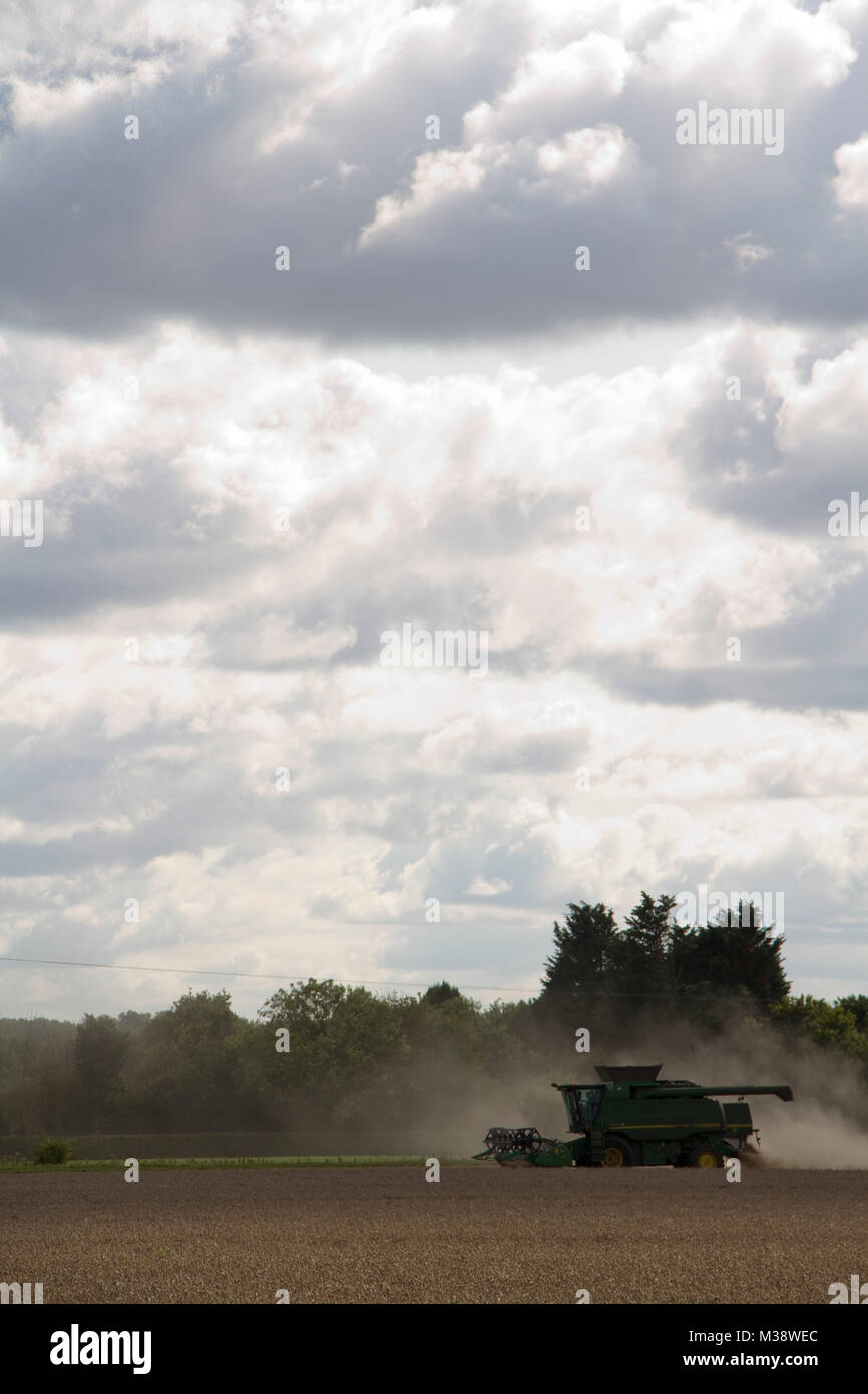 Combine harvester in a cloud of dust on a cloudy day - Stock Image