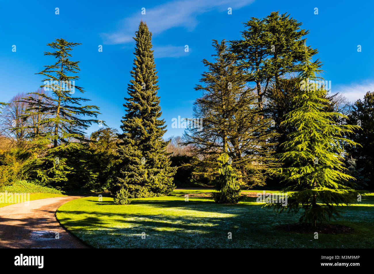 Gravel pathway and trees at Hughenden, Buckinghamshire, UK - Stock Image