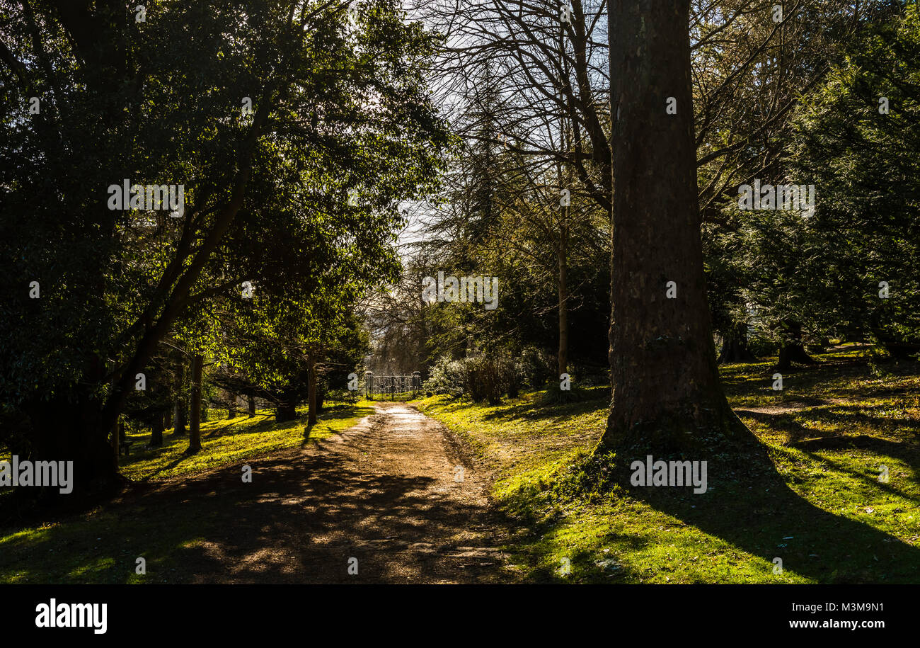 Wooded pathway and trees at Hughenden, Buckinghamshire, UK - Stock Image