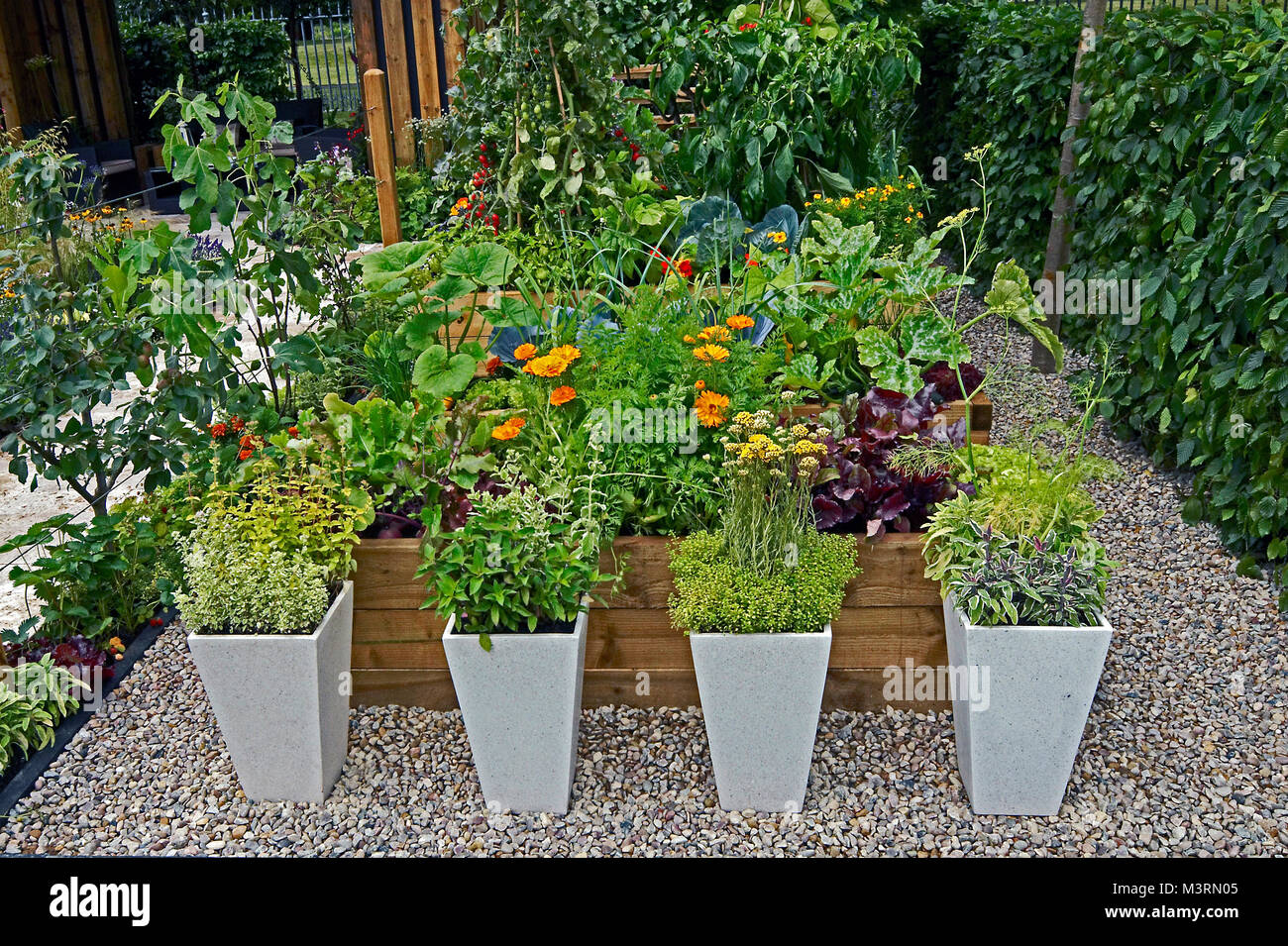 A decorative herb and vegetable garden with planted containers Stock ...
