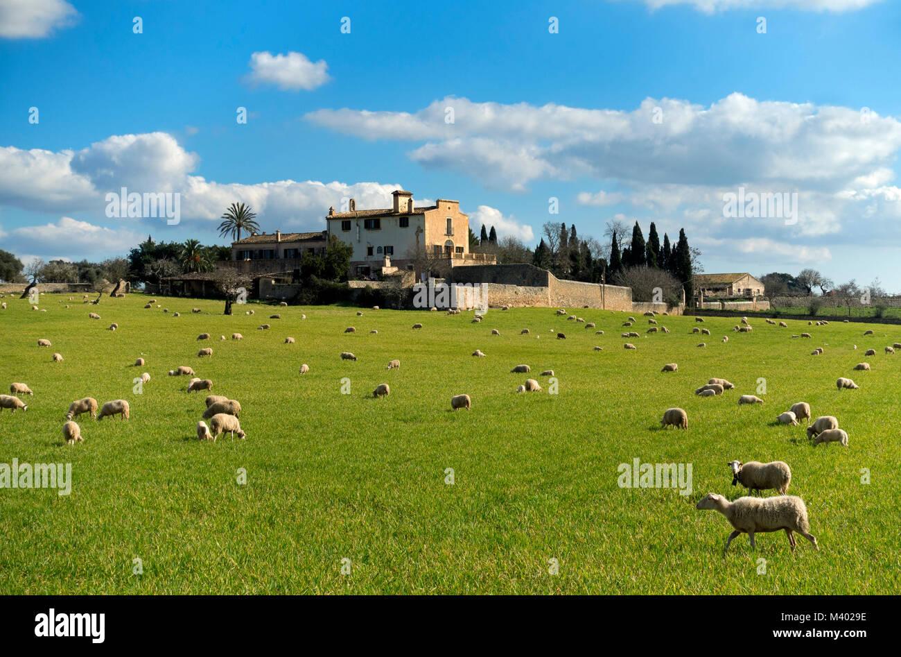 Son Bordils rural farm.Mallorca Island.Spain - Stock Image