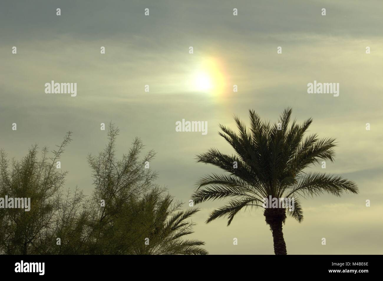 A Sun Dog Over A Palm Tree in Tempe, Arizona - Stock Image