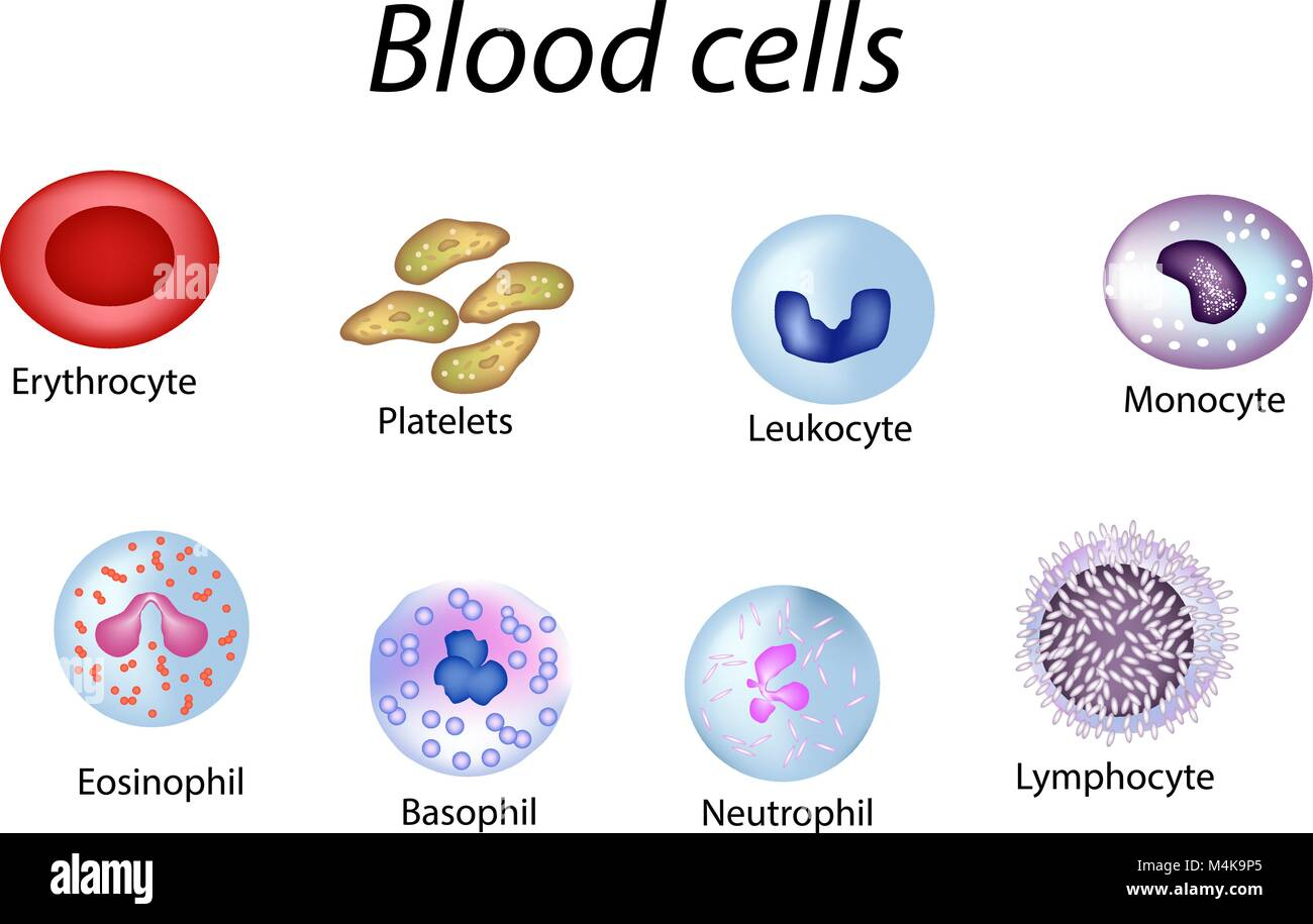 White Blood Cell Diagram 3d Wiring Diagrams For Kids Cells Red Monocytes Stock Photos Images Alamy Labeled With Labels