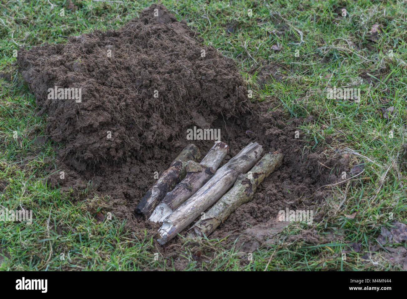 Grass cut away to form shallow pit for a covert survival fire which 'leaves no trace'. Wood base layer added - Stock Image