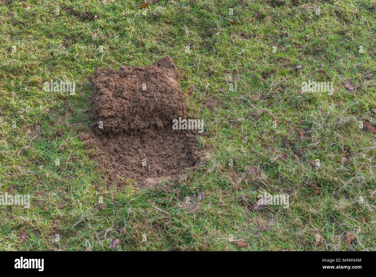 Grass turf cut away to form a shallow pit for a covert survival fire which 'leaves no trace'. Fire pit before - Stock Image