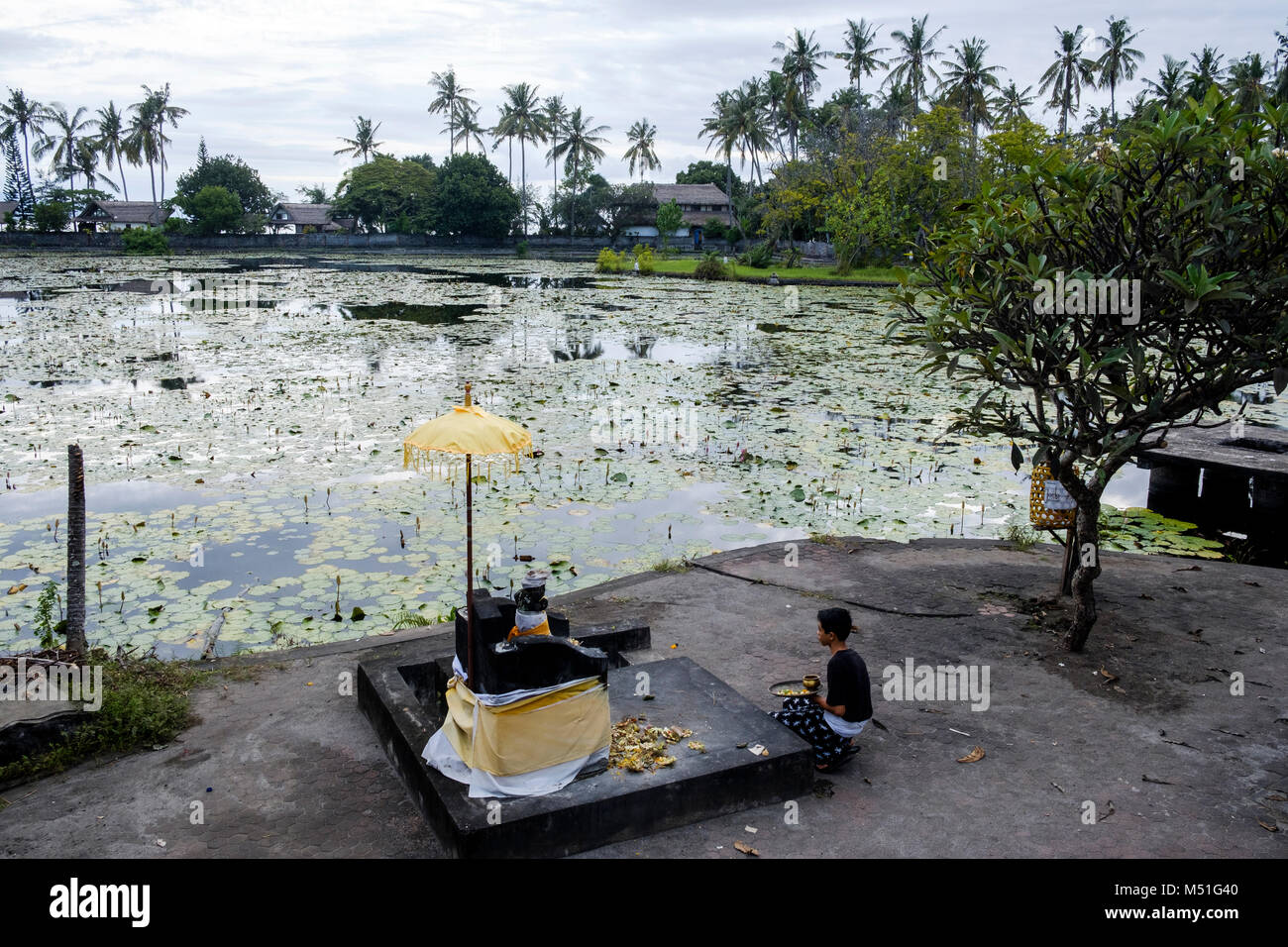 A young man makes religious offerings on the shores of the Candidasa Lotus Pond, Bali, Indonesia. - Stock Image