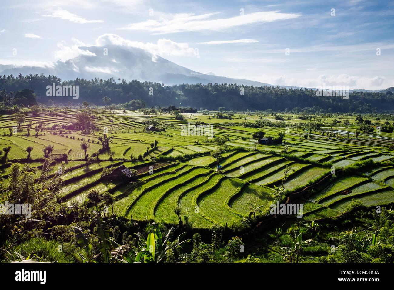 Agung volcano (Gunung Agung) seen over rice terraces from the West, Karangasem Regency, Bali, Indonesia. - Stock Image
