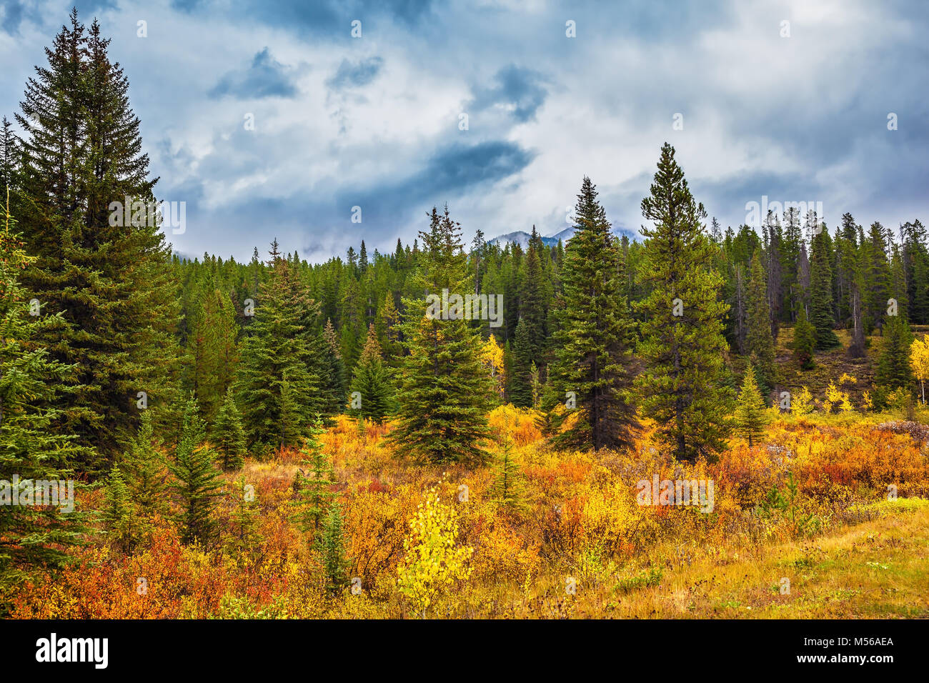 Fine Indian summer in Banff National Park - Stock Image