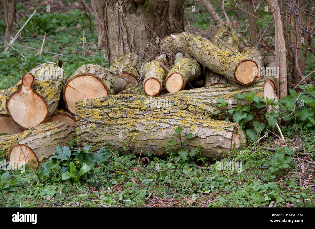 Small pile of cut logs - Stock Image