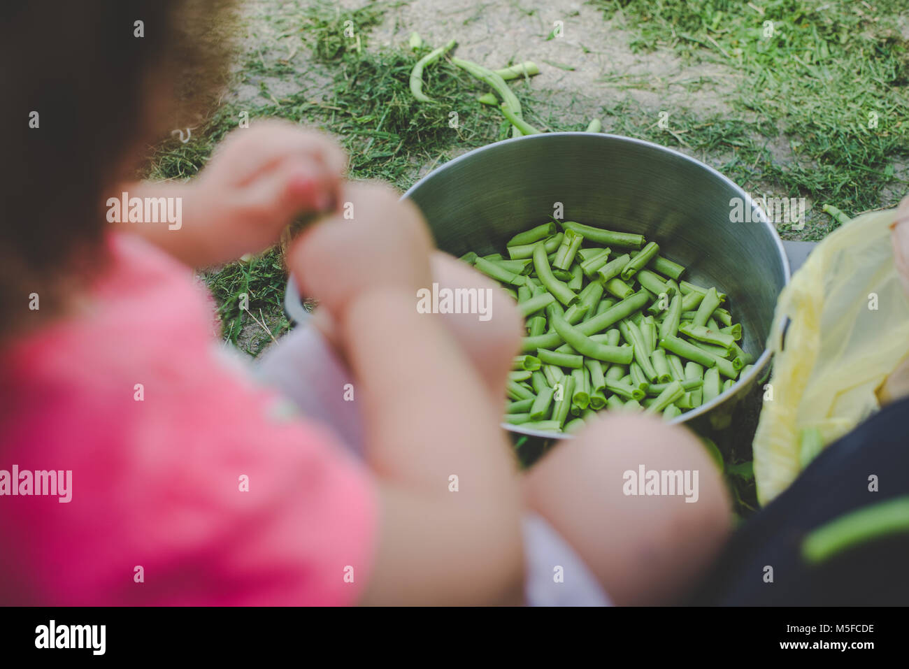 A young girl child snaps fresh green beans into a pot. - Stock Image