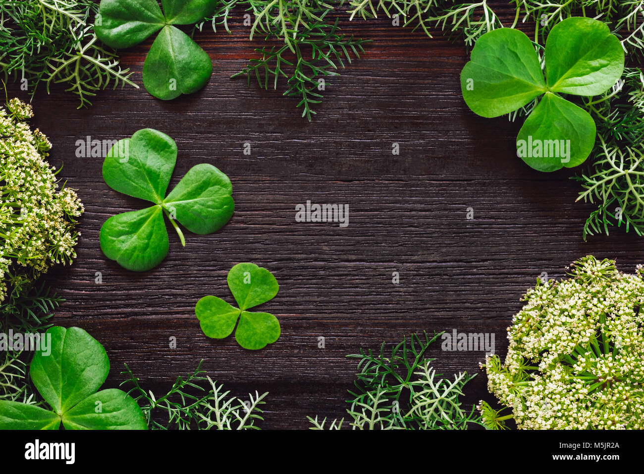 Shamrocks with Mixed Foliage on Dark Table with Space for Copy - Stock Image