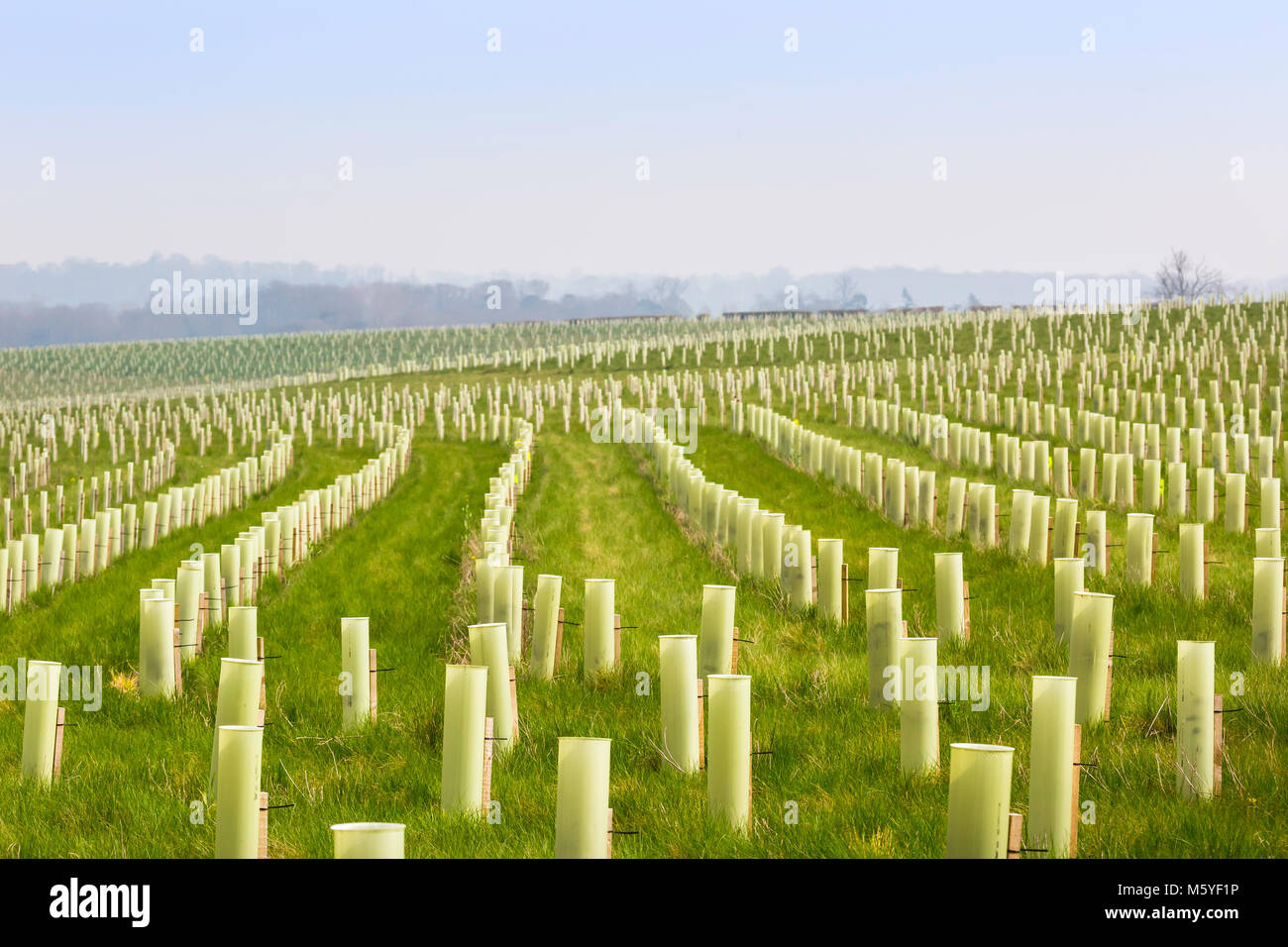 A tree planting scheme in the National Forest. Stock Photo