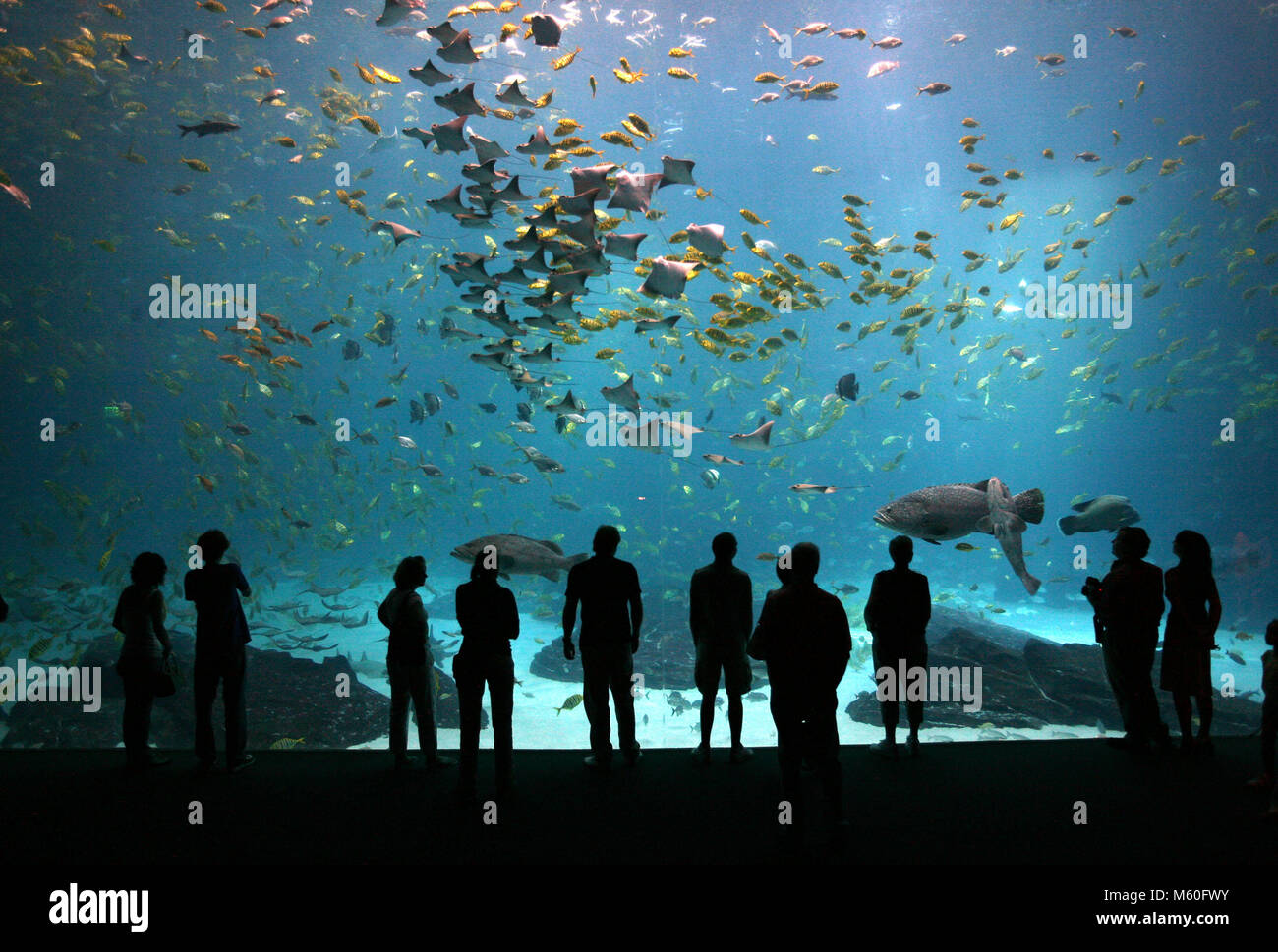 Visitors To The Georgia Aquarium Observe Fish And Rays One Of The