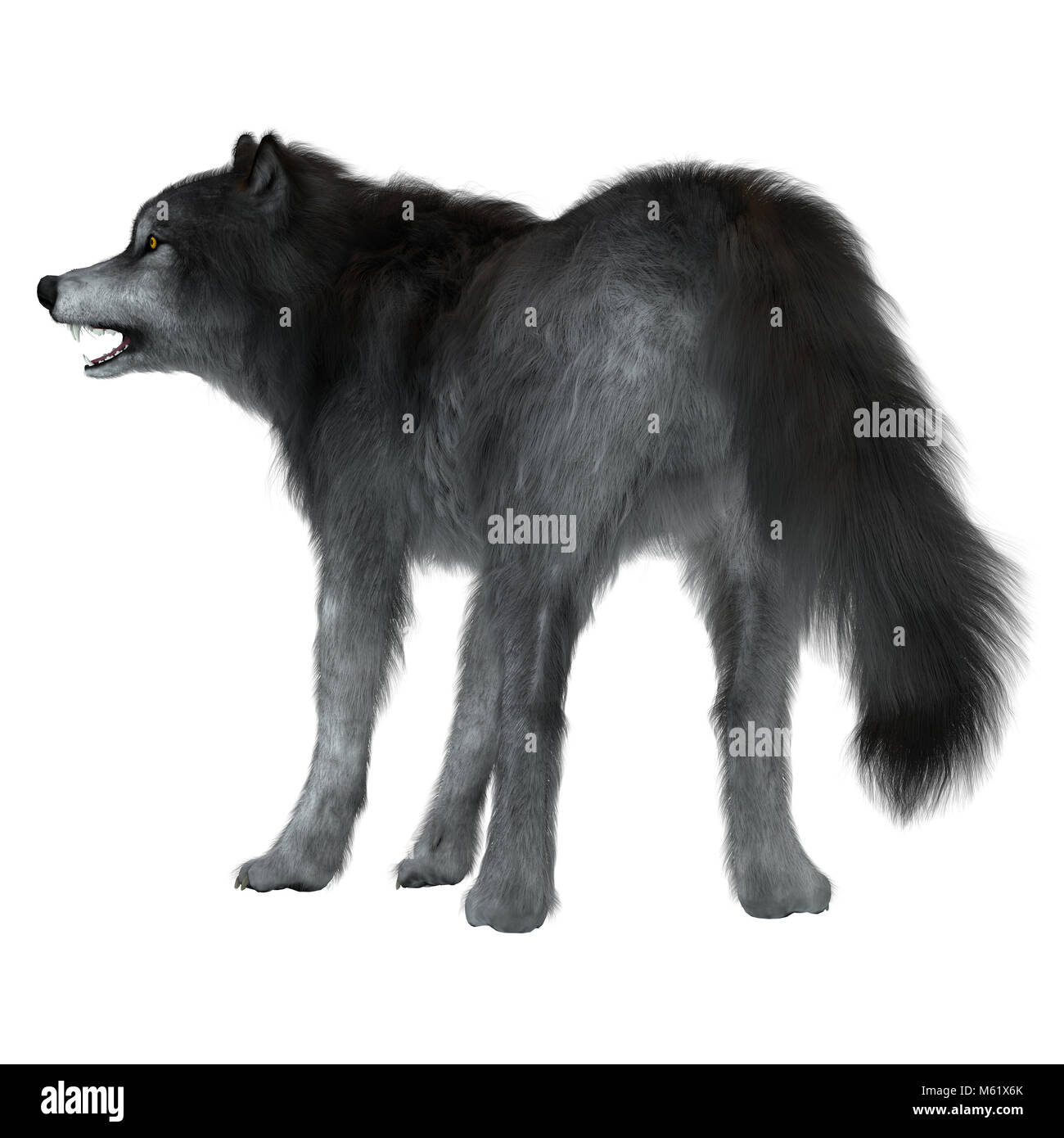 The Dire Wolf was a prehistoric carnivore that lived in North and South America during the Pleistocene Period. - Stock Image