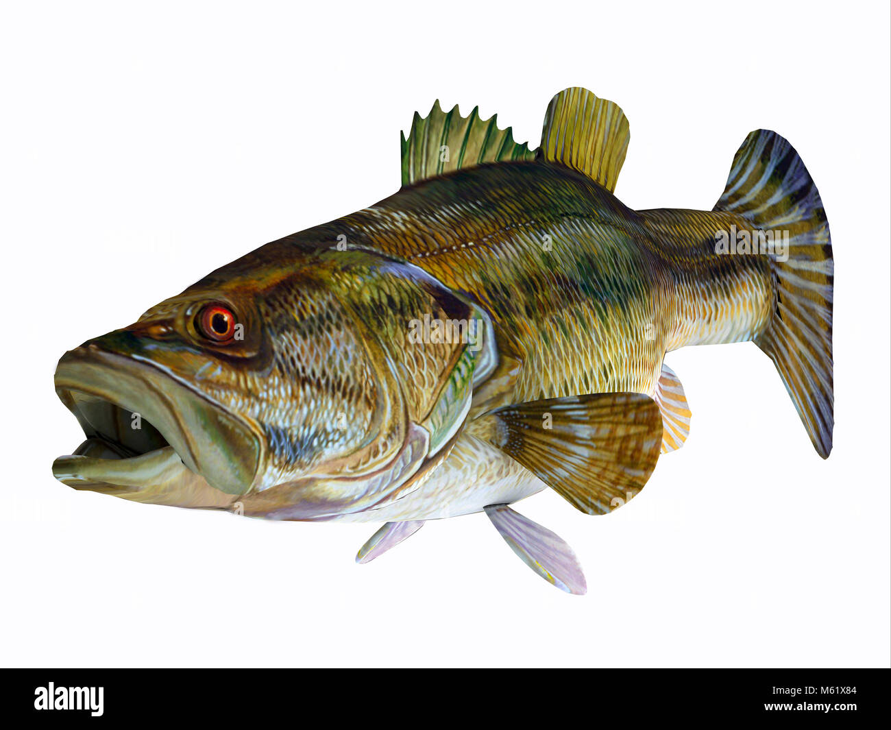 The Redeye Bass is a popular freshwater gamefish which has a diet consisting mostly of insects. - Stock Image