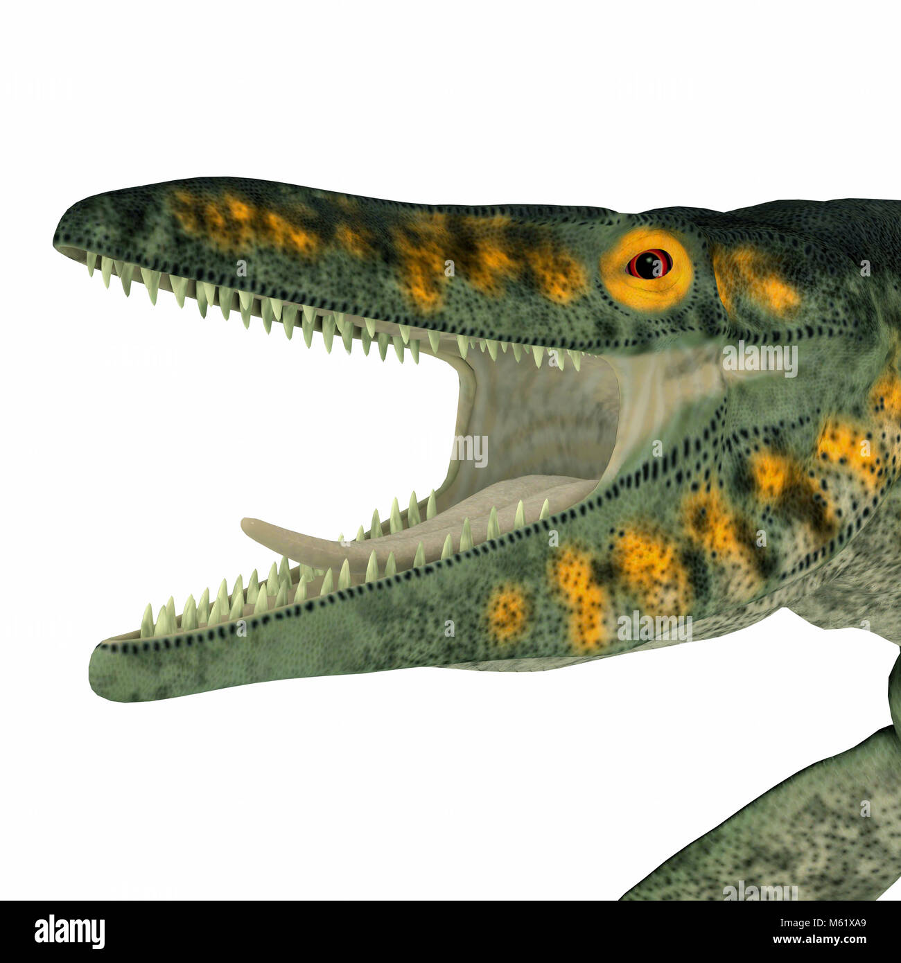 Tylosaurus was a carnivorous marine reptile that lived in the North America Western Interior Seaway during the Cretaceous - Stock Image