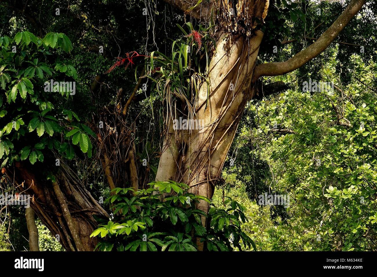 botanischen stock photos botanischen stock images alamy. Black Bedroom Furniture Sets. Home Design Ideas