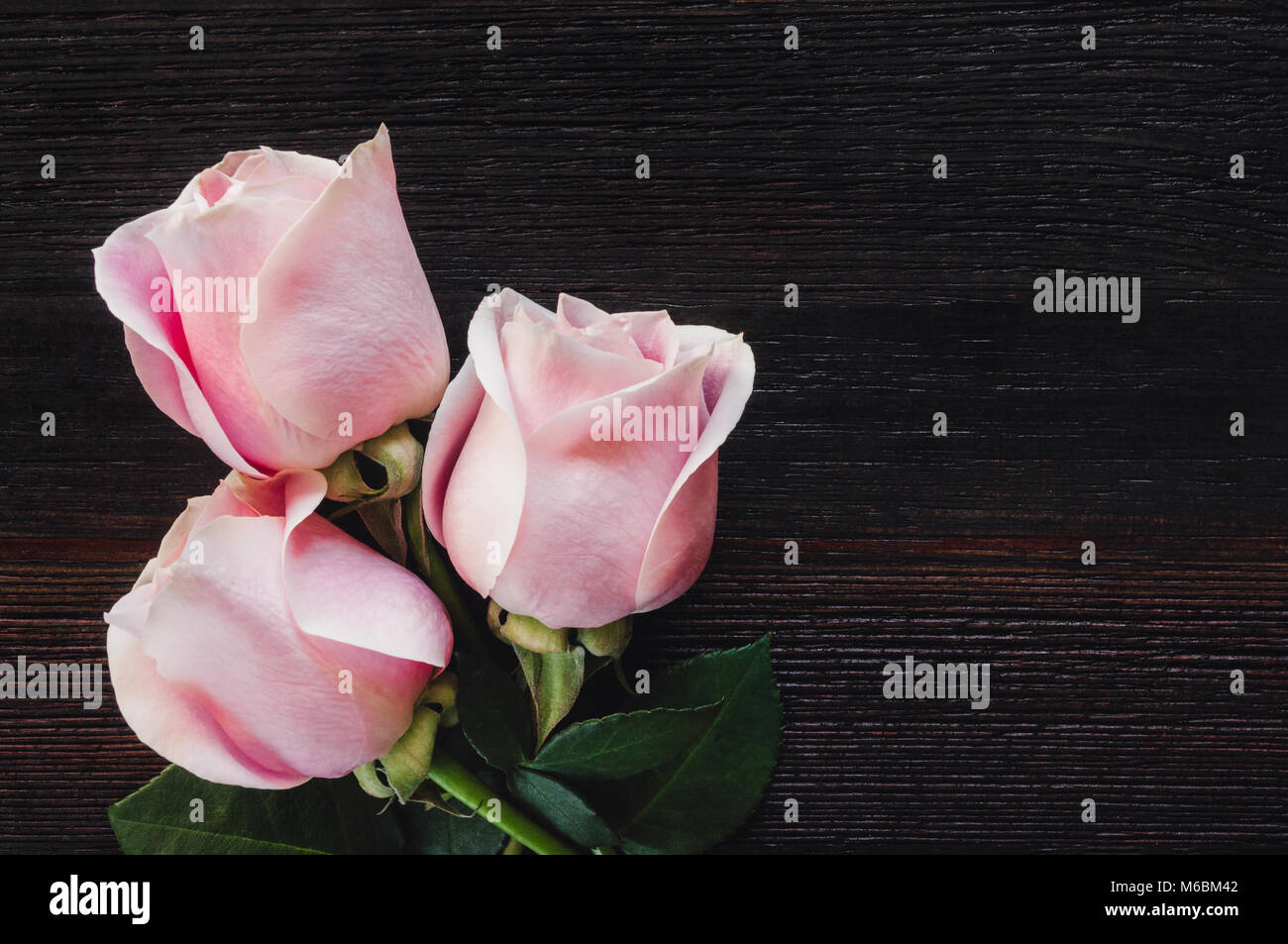 Pink Roses on Dark Table with Space for Copy - Stock Image