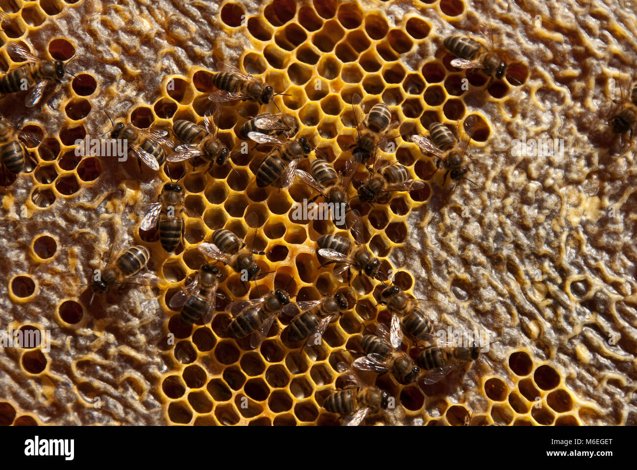 natural-honey-bees-honeycomb-with-cells-