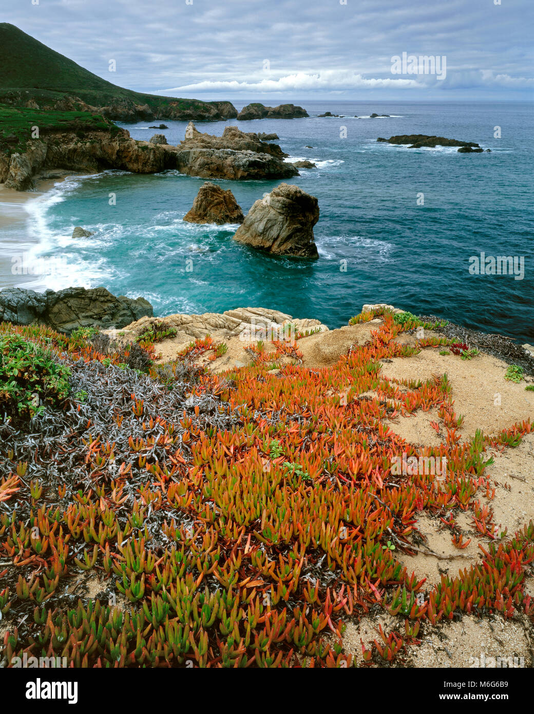 Ice Plant, Garrapata State Park, Big Sur, Monterey County, California Stock Photo